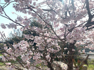 ほのぼの春